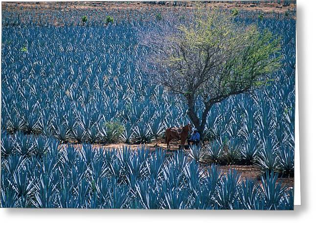 In The Shade Greeting Cards - Agave Greeting Card by Christian Heeb