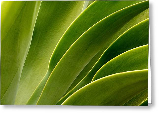 Agave Greeting Card by Eric Foltz