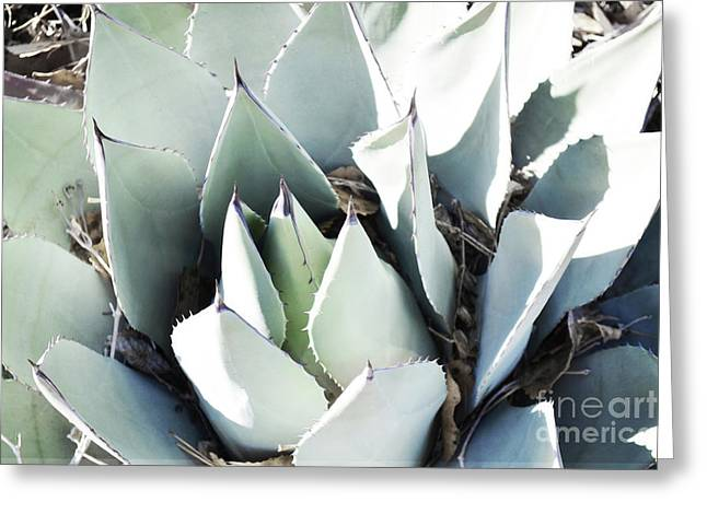 Greeting Card featuring the photograph Agave Plant Leaves by Andrea Hazel Ihlefeld