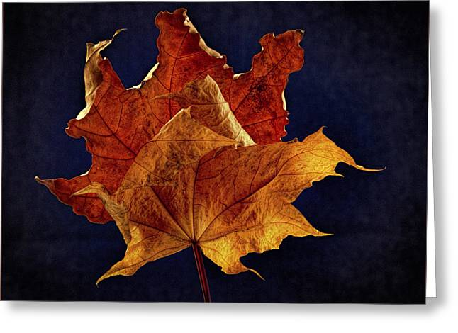 Aged Maple Duo Greeting Card by Jean Noren