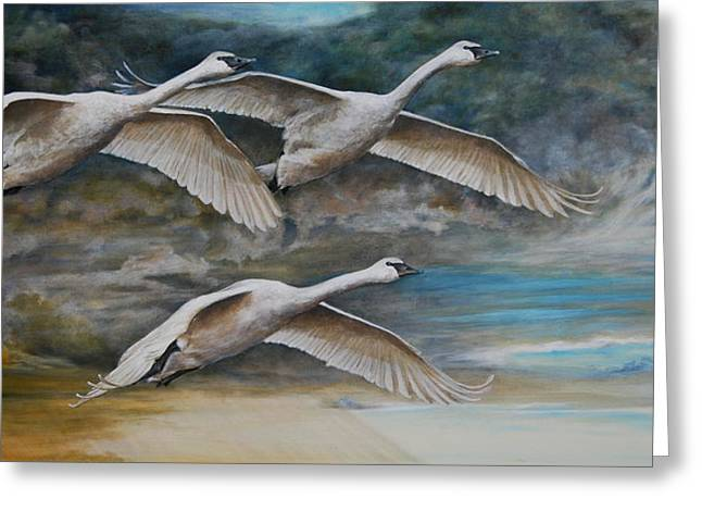Ahead Of The Storm - Trumpeter Swans On The Move Greeting Card by Rob Dreyer