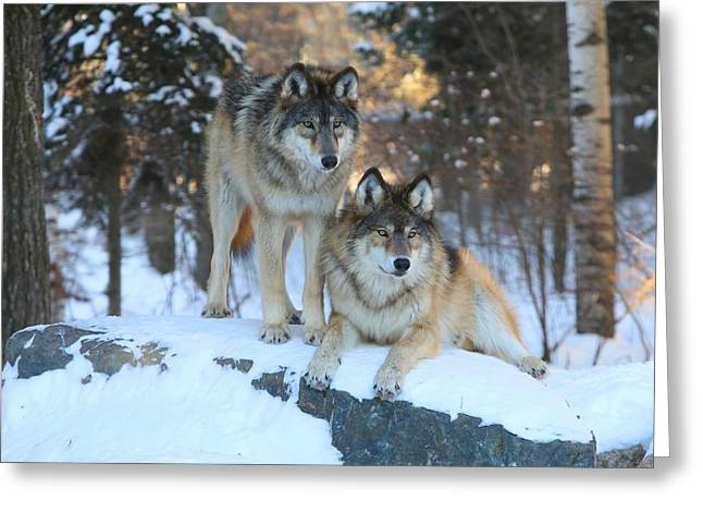 Aidan And Denali-brothers Forever Greeting Card
