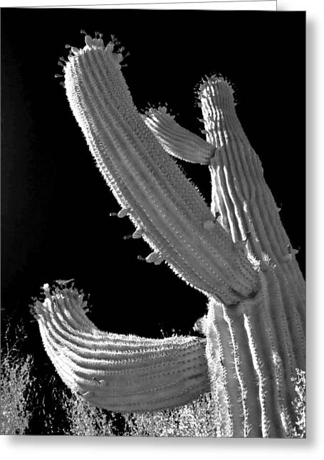 Ain't No Saguaro In Texas Greeting Card by Christine Till