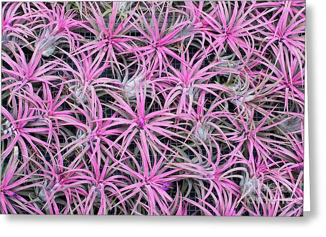 Airplants Greeting Card by Tim Gainey