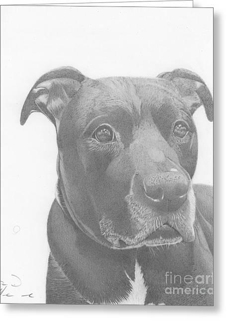 Ajax Graphite Dog Portrait  Greeting Card
