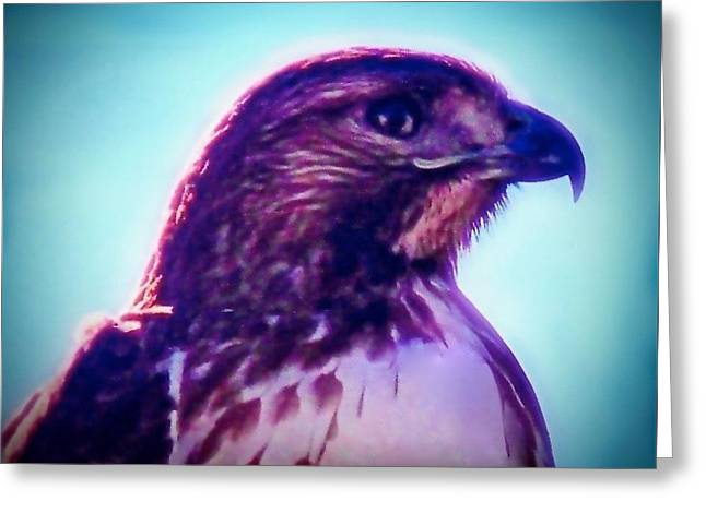 Ak-chin Red-tailed Hawk Portrait Greeting Card