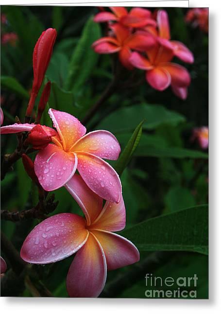 Akeakamai Pua Melia Tropical Plumeria Greeting Card