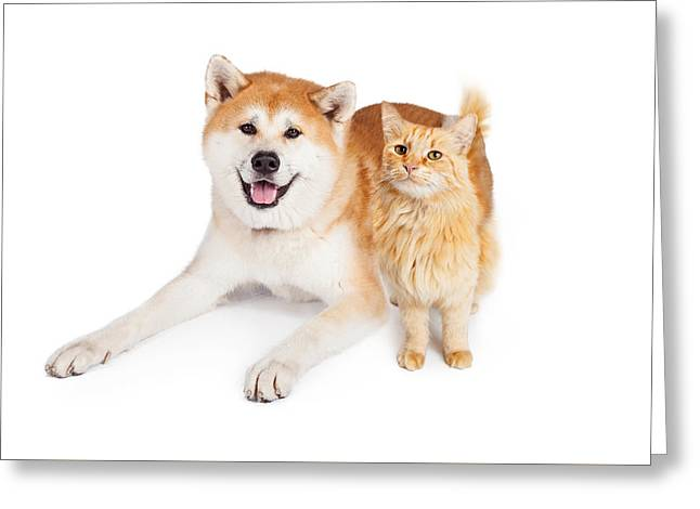 Akita Dog And Tabby Cat Over White Background Greeting Card by Susan Schmitz