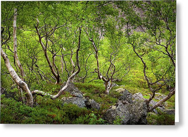 Aku Aku Birches Greeting Card by Konstantin Dikovsky