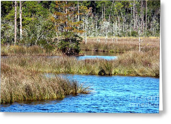 Alabama Waterway Greeting Card by Carol Groenen