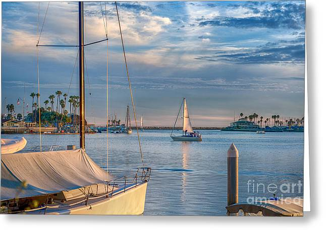 Alamitos Bay Inlet Sailboat Greeting Card by David Zanzinger