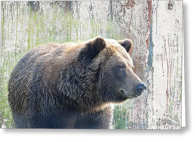 Alaska Brown Bear  Greeting Card by Dyle   Warren