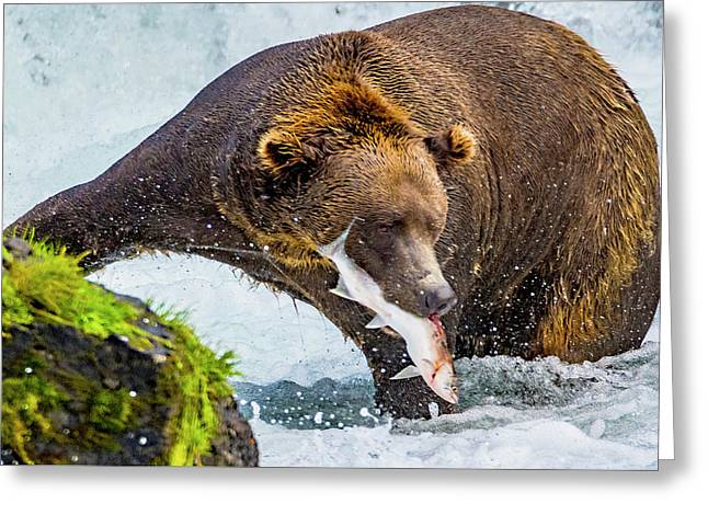 Alaska Brown Bear Greeting Card
