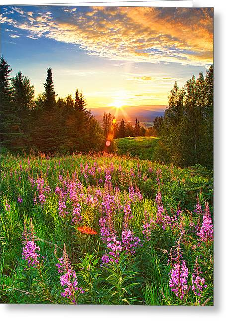 Alaska Field Greeting Card