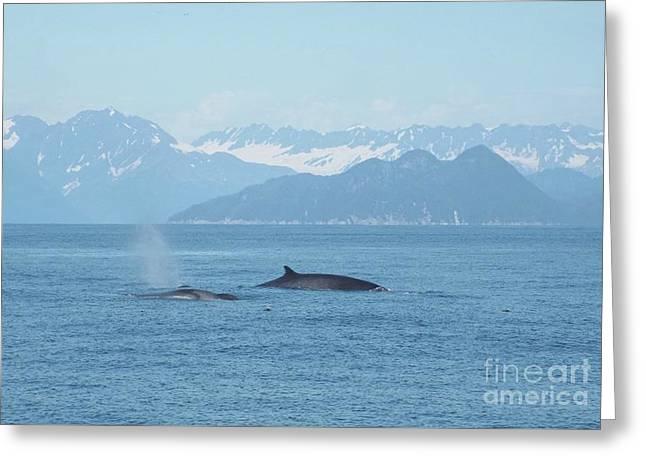 Alaska Finback Whales Greeting Card