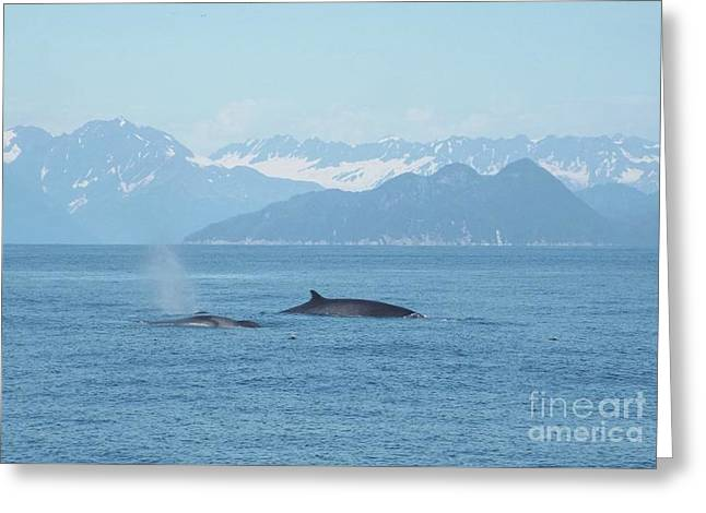 Alaska Finback Whales Greeting Card