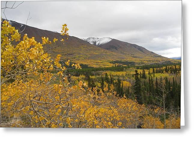 Alaska Frontier Greeting Card by Kimber  Butler