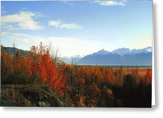 Alaskan Fall Greeting Card by Brigid Nelson