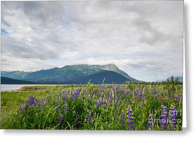 Alaskan Wildflowers Greeting Card