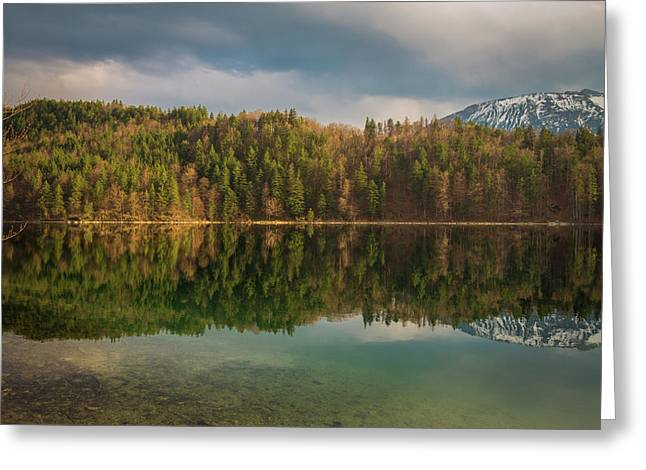 Alatsee Forest Reflection Greeting Card by Chris Fletcher