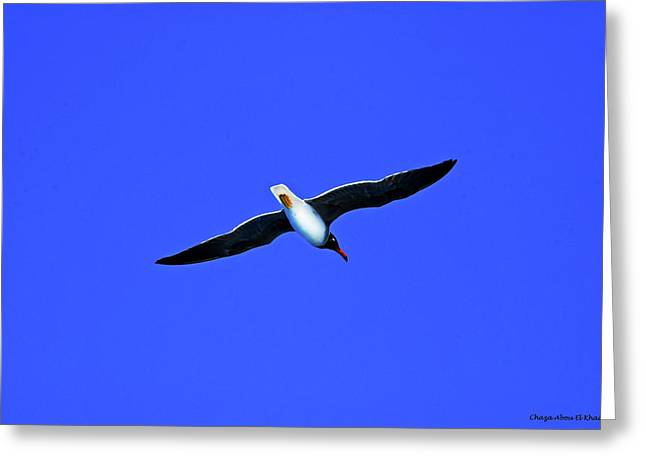 Albatros Greeting Card by Chaza Abou El Khair