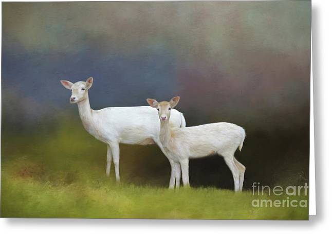Albino Deer Greeting Card