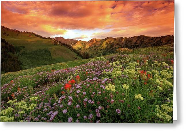 Albion Basin Golden Sunrise Greeting Card