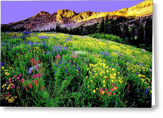 Albion Meadows Greeting Card