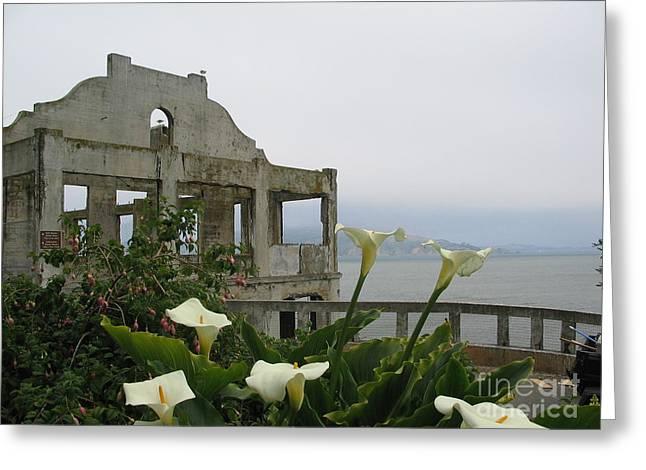 Alcatraz Flowers Greeting Card by Frederick Holiday