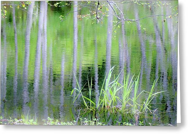 Alder Reflections Greeting Card