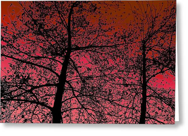 Alder Trees Against The Winter Sunrise Greeting Card