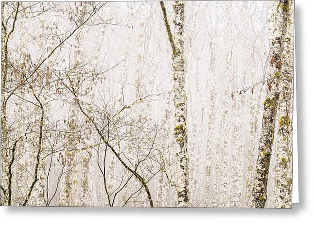 Alders In The Fog Greeting Card