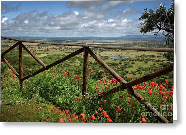 Alentejo Landscape Greeting Card by Carlos Caetano