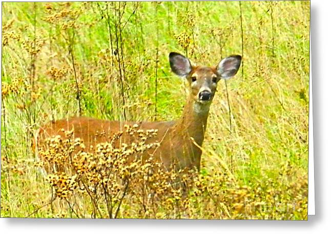 Alert White Tail Doe In Field Greeting Card by Julie Dant