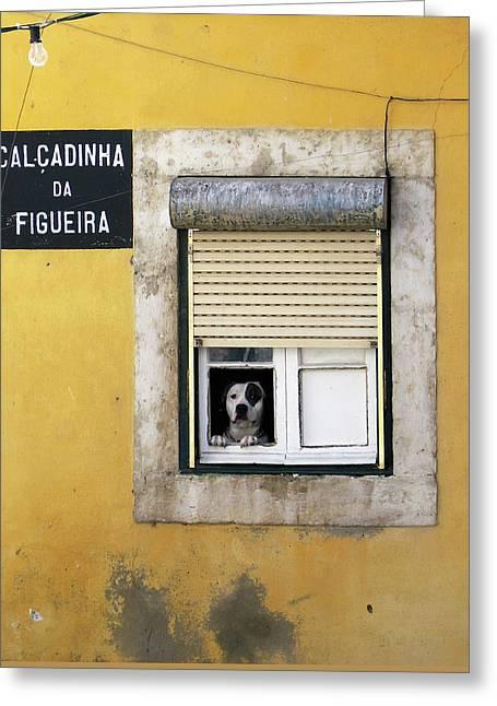 Alfama Dog In Window - Calcadinha Da Figueira  Greeting Card
