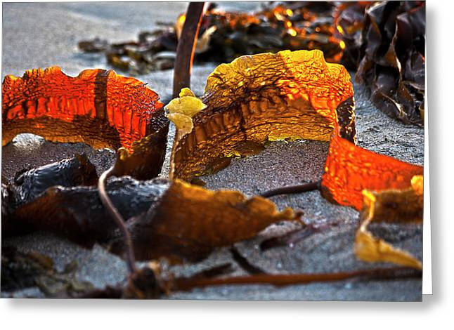 Algae at low tide Greeting Card by Heiko Koehrer-Wagner