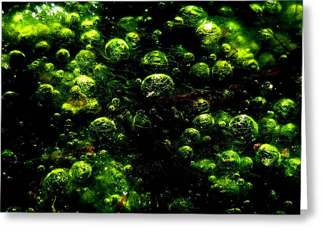 Algae Bubbles Greeting Card by Catherine Natalia  Roche