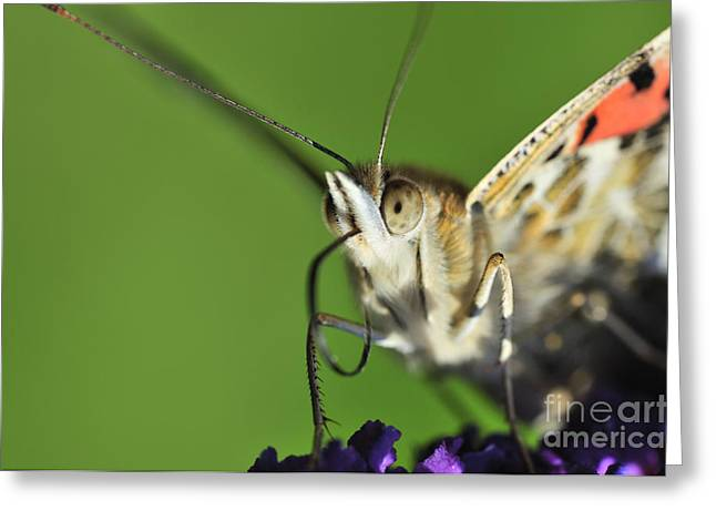 Alien Painted Lady Greeting Card by Andy Smy