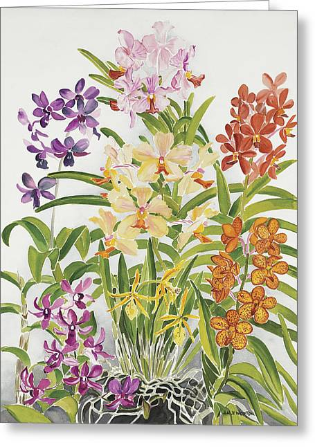 Alis Orchids Greeting Card by Anji Worton