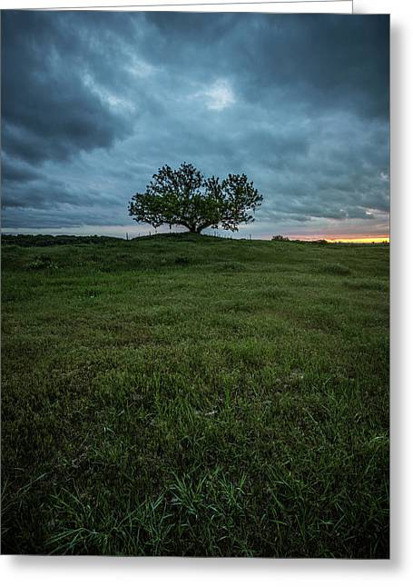 Alive Greeting Card by Aaron J Groen