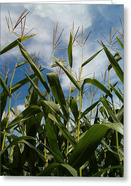 All About Corn Greeting Card by Sara  Raber