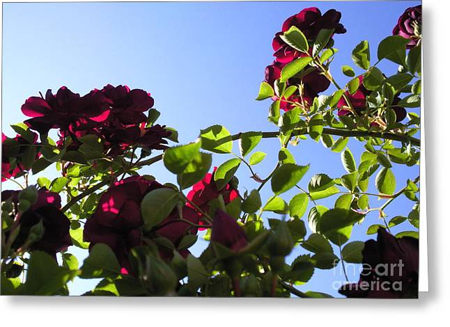 All About Roses And Blue Skies I Greeting Card by Daniel Henning