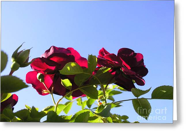 All About Roses And Blue Skies II Greeting Card by Daniel Henning