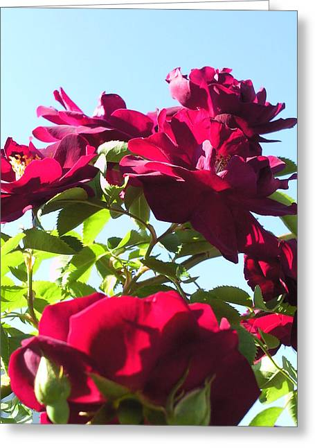 All About Roses And Blue Skies IIi Greeting Card by Daniel Henning