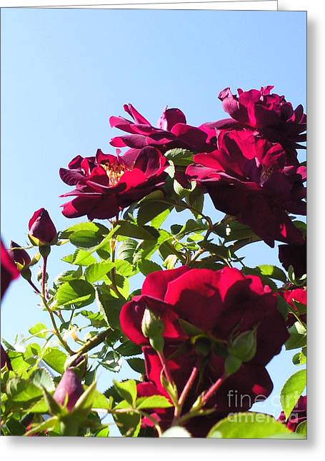 All About Roses And Blue Skies Ix Greeting Card by Daniel Henning