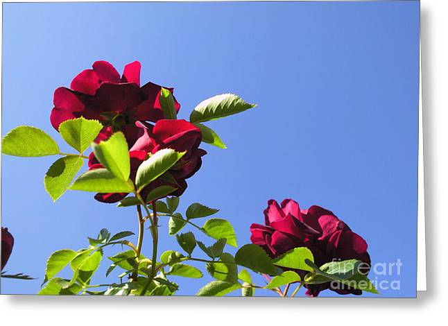 All About Roses And Blue Skies V Greeting Card by Daniel Henning