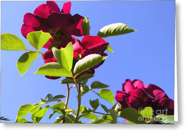 All About Roses And Blue Skies Vi Greeting Card by Daniel Henning