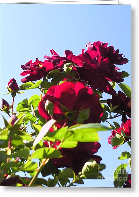 All About Roses And Blue Skies X Greeting Card by Daniel Henning