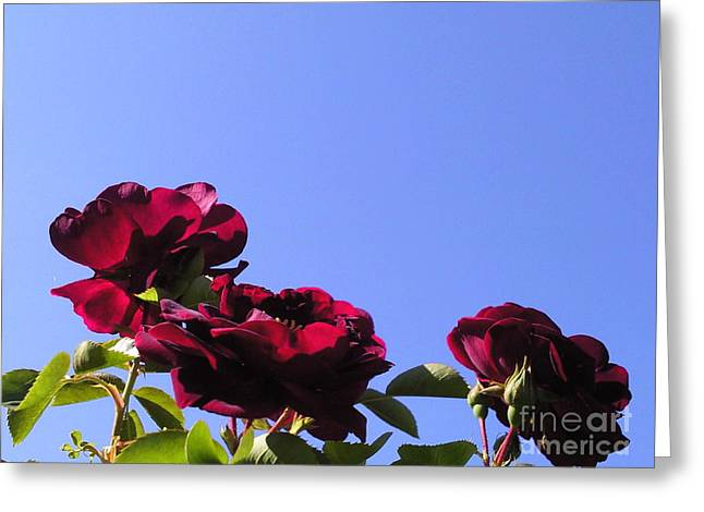All About Roses And Blue Skies Xi Greeting Card by Daniel Henning