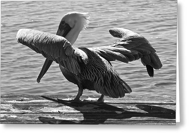 All Clear For Take Off Greeting Card by Bonnes Eyes Fine Art Photography